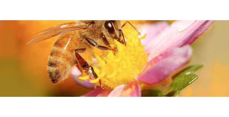 Solutions pour protéger la biodiversité et sauvegarder les abeilles
